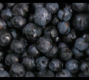Bilberry Leaf Cut And Sifted Bulk By The Ounce
