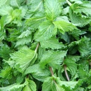 Spearmint Leaf Cut And Sifted Bulk By The Ounce
